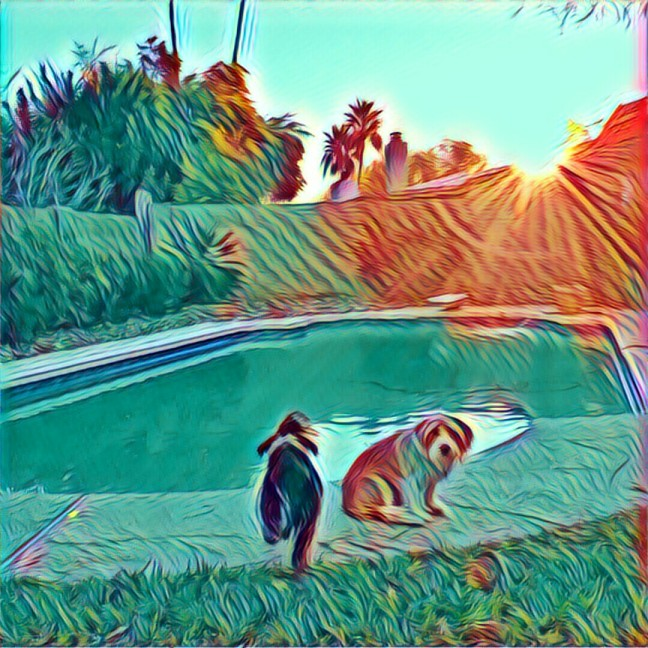 Creative uploads dogs photo filter prisma